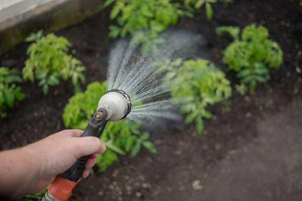 سیستم آبیاری دستی در گلخانه ها