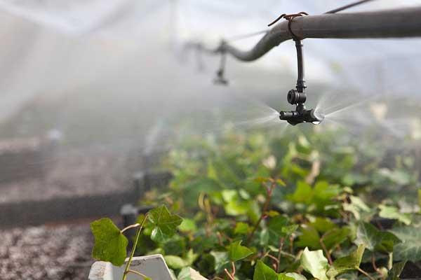 انواع سیستم های آبیاری گلخانه ای