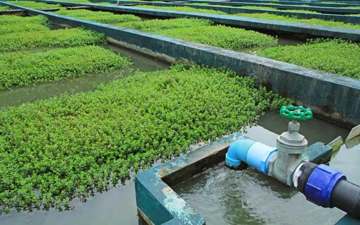استفاده از سیستم های فاضلابی برای آبیاری زمین های کشاورزی