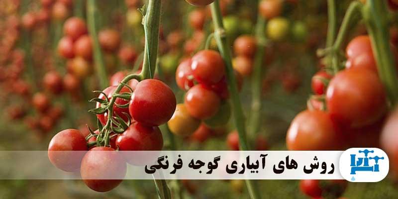 روش های آبیاری گوجه فرنگی
